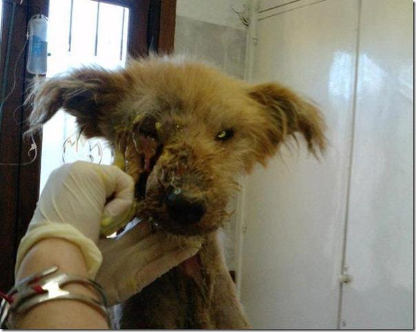 História incrível do salvamento de um cão (3)