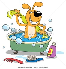 stock-photo-bathing-of-a-puppy-68945836