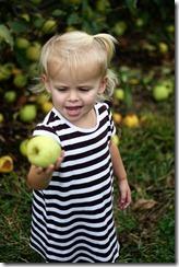 Apple picking sadie 2