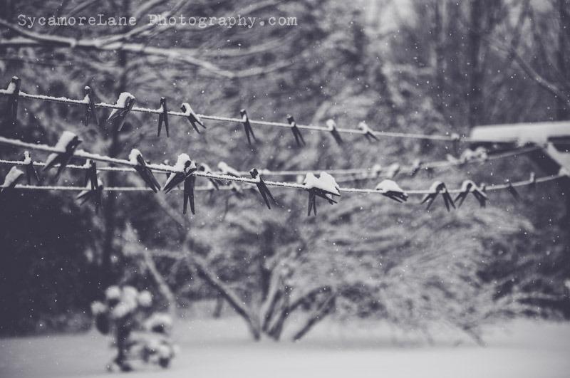 SycamoreLane Photography-102