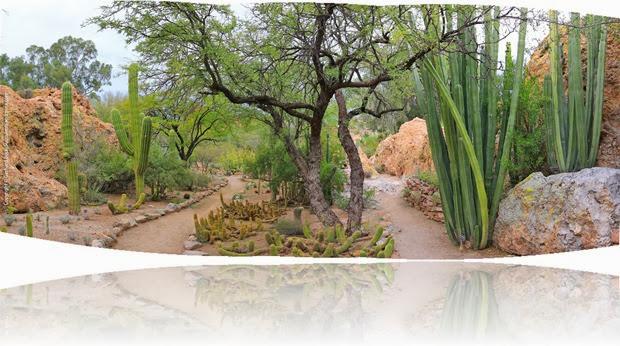 131204_BoyceThompsonArboretum_CactusGardenPano