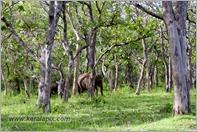 _P6A1679_wild_elephants_mudumalai_bandipur_sanctuary