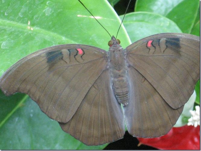 Farfalle 113
