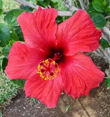 ten97 flower
