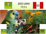 ZOO LIMA (PERU)