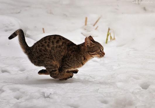 kot-sneg
