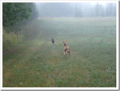 20120802_morning-mist_006