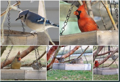 feeder visitors0215