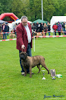 20100513-Bullmastiff-Clubmatch_30996.jpg