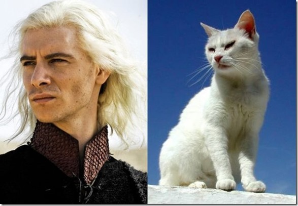 cats-game-thrones-11