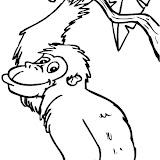 Orangutang.jpg