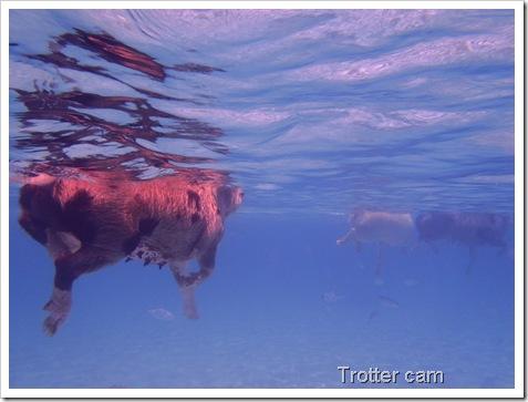 Staniel Cay Underwater Camera 143