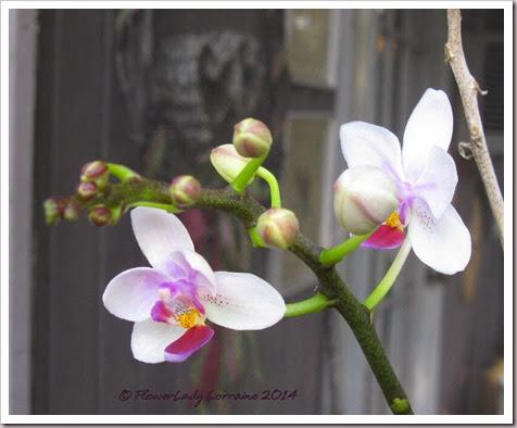 01-14-orchids