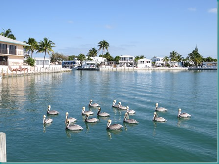 Rv lot for rent in florida keys florida keys rv lot at for Fish cleaning station near me