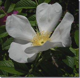fiori casa nuova 064