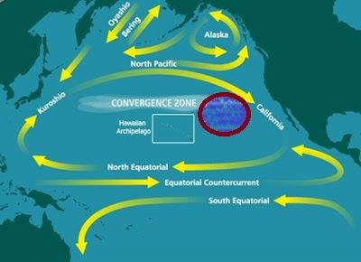 太平洋大垃圾帶示意圖.jpg