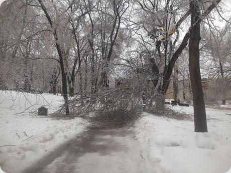 broken tree 2