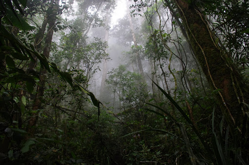 The creepy cloud forests surrounding Mount Kinabalu.