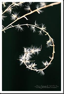 2012 01 06 IMG_8846w