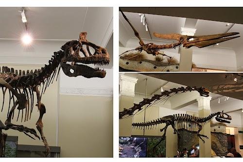 auckland-museum-3.JPG