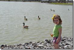 Feeding the Ducks 045