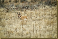 - pRONGHORN_ROT8021 February 18, 2012 NIKON D3S
