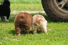 Puppy bums