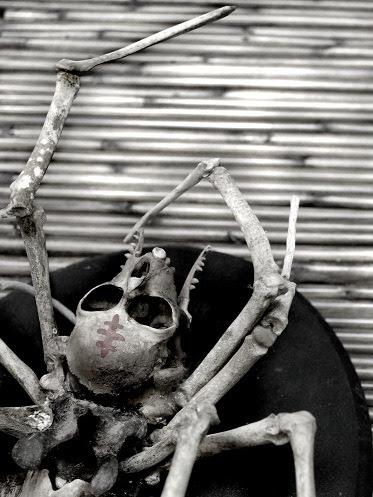 Spider She AnjiMarth Taxidermy