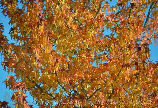 13  Glória Ishizaka - Folhas de Outono 2013