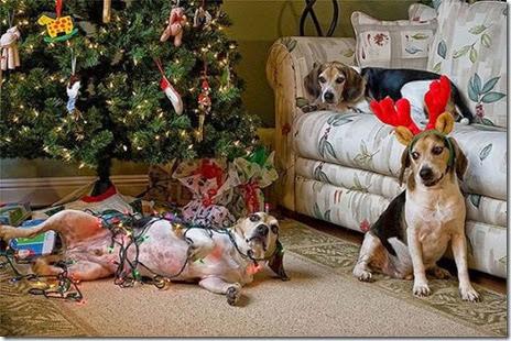 pets-hate-christmas-017