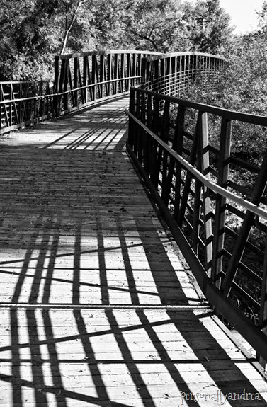meadowvale black and white_003