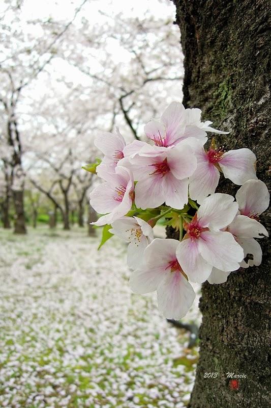 大阪城西之丸庭(おおさかじょう にしのまる)