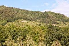 Einkorn in Tuscany