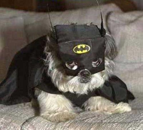 Gatos_caes_Batman13