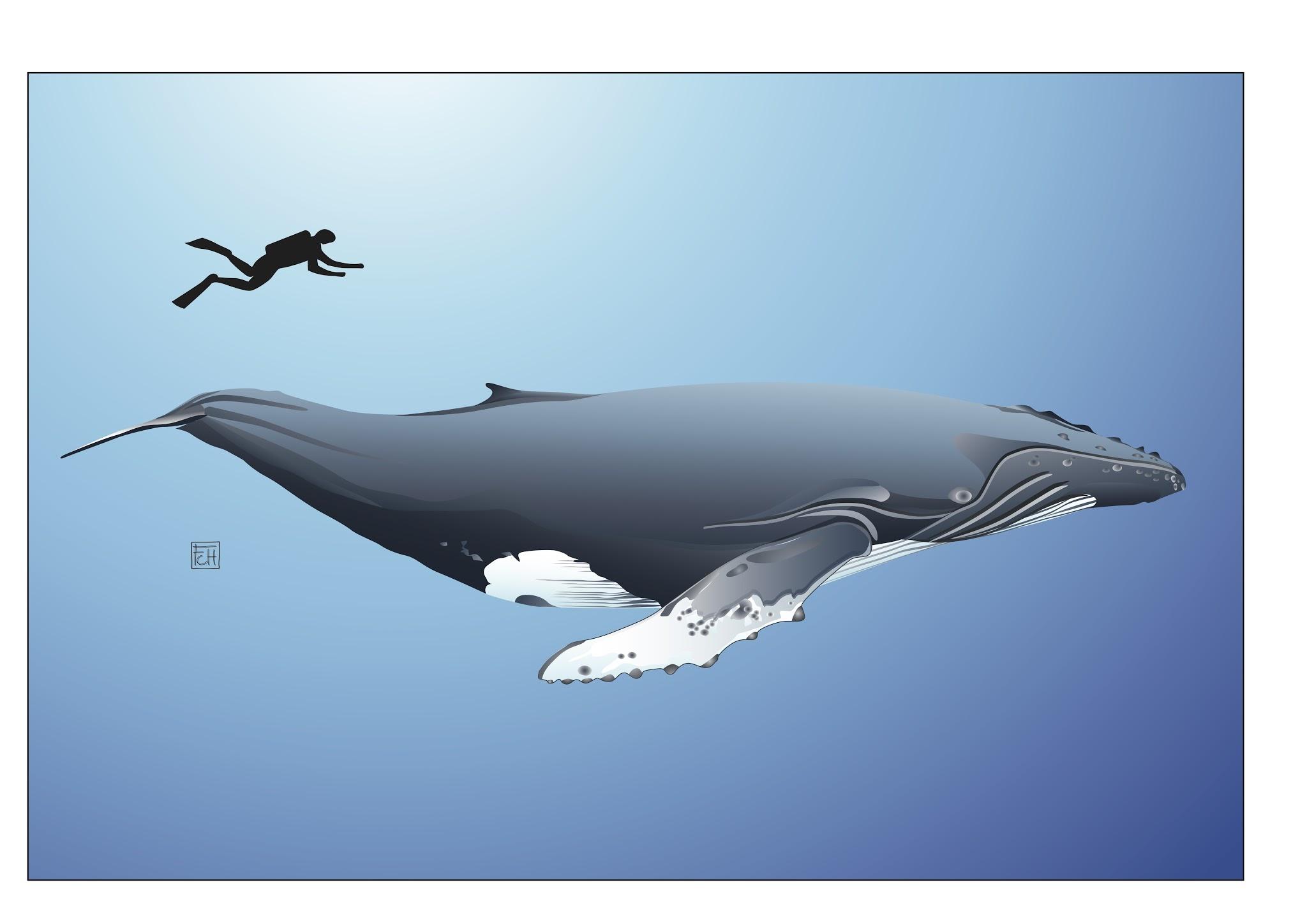 blue whale size - HD2048×1448