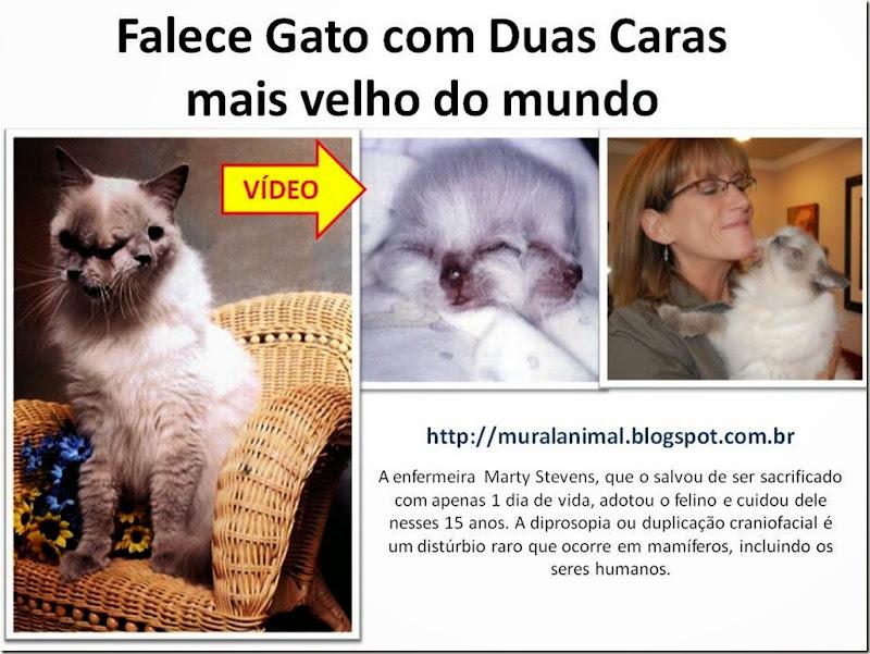 Falece Gato com Duas Caras