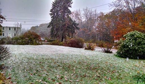 1. 11-2-14 first snow
