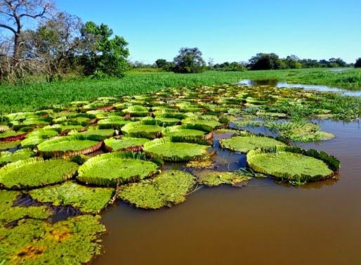 Canal do Jari, Santarém - Parà