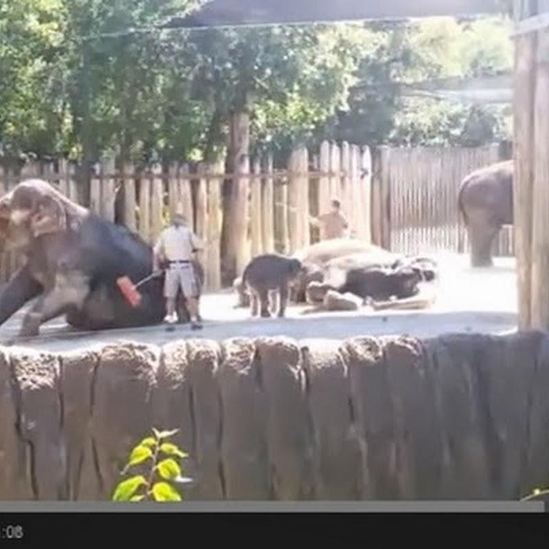 Ελέφαντας κάνει το μπανάκι του