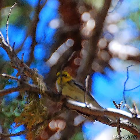 3. creeping along branch-kab