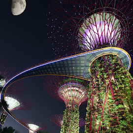 Supertree by Thigh Wana - City,  Street & Park  Skylines