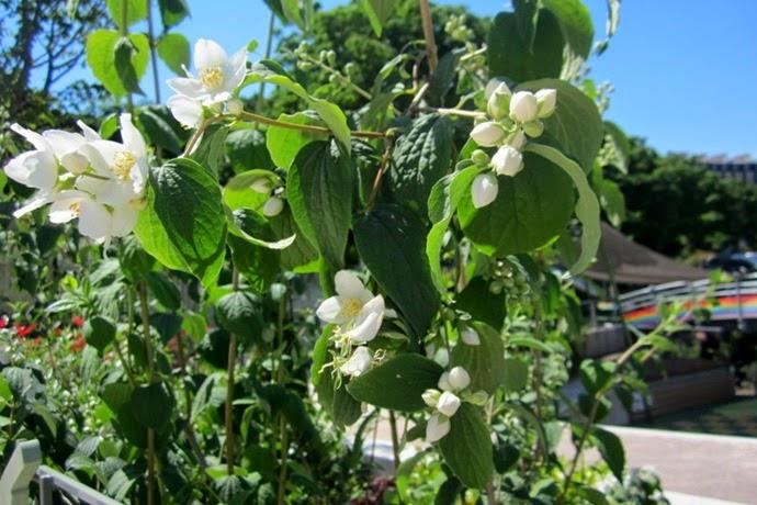 fleurs jardin mandela paris