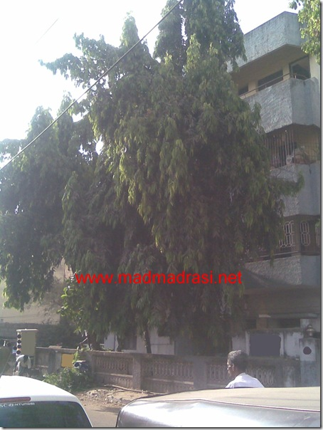 apartment_with_trees
