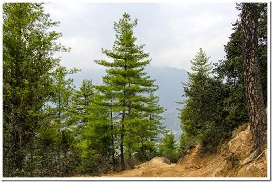 Bhutan 114