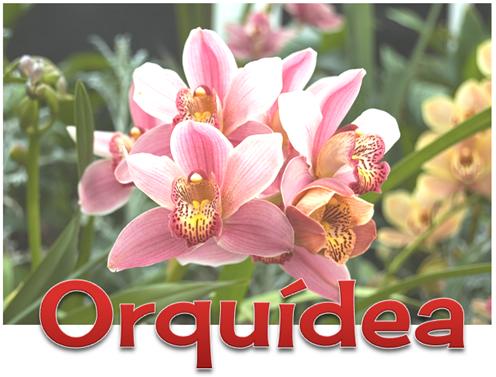 6 ORQUIDEA[4]
