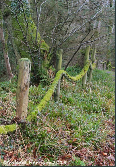 1-Mossy-ropes