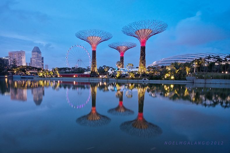 supertrees-singapore-5
