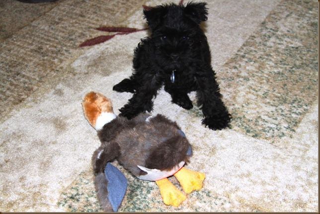 Emmi and her Duck_1