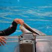 Boudewijn Seapark-047.JPG