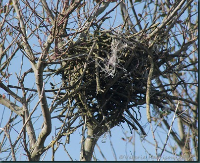 21-nest